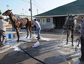 Java's War (L) and stablemate Frac Daddy, getting their baths.