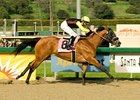 "Dearest Trickski romps to victory in the Sunshine Millions Filly & Mare Sprint.<br><a target=""blank"" href=""http://www.bloodhorse.com/horse-racing/photo-store?ref=http%3A%2F%2Fpictopia.com%2Fperl%2Fgal%3Fprovider_id%3D368%26ptp_photo_id%3D3399773%26ref%3Dstory"">Order This Photo</a>"
