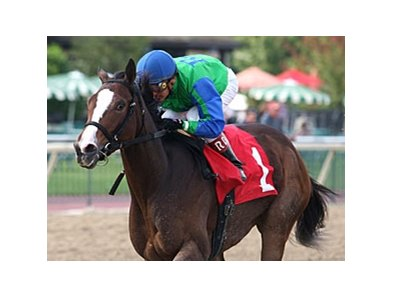 Say a Novena won 3 races in 2011, including the Brandywine Stakes.
