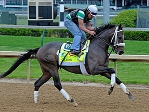 Oxbow jogs at Churchill Downs for the Kentucky Derby.