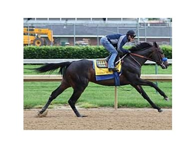 Pioneerof the Nile works a quick four furlongs on May 11 at Churchill Downs.