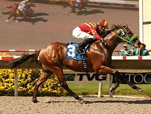Native Treasure wins the 2012 I'm Smokin Stakes.
