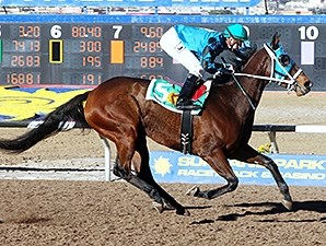 Rose's Desert wins the 2013 New Mexico State Racing Commission Handicap.