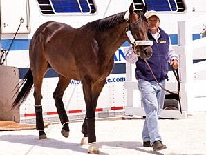Itsmyluckyday arrives at Pimlico, May 14, 2013.
