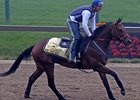 "Mine That Bird training during Preakness week <br><a target=""blank"" href=""http://www.bloodhorse.com/horse-racing/photo-store?ref=http%3A%2F%2Fgallery.pictopia.com%2Fbloodhorse%2Fgallery%2FS719439%2Fphoto%2F8114690%2F%3Fo%3D0"">Order This Photo</a>"
