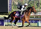 Alterite