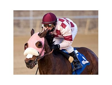 Greenspring won the Native Dancer Stakes on Jan. 2 by six lengths.
