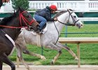Cozzetti works towards the Preakness.