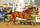 Big Brown Crushes Preakness Rivals