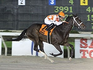 She Loves Runnin' wins the 2014 Lookout Stakes.