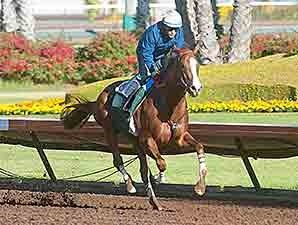 California Chrome - Los Alamitos, April 26, 2014