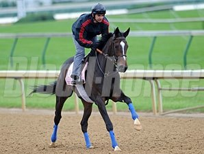 Suave Voir Faire jogging at Churchill Downs 5/4/2011.