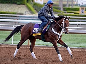 Unbridled Forever works towards the Breeders' Cup.