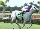 Wesley powers home in the Miami Mile.