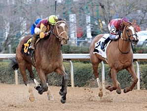 Satans Quick Chick wins the 2011 Pippin Stakes.