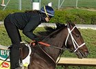 Titletown Five