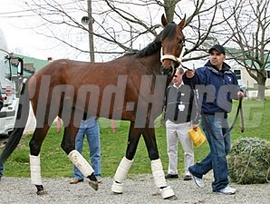 Chocolate Candy arrives at Churchill Downs on April 16, 2009.