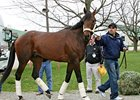 Chocolate Candy was part of the California contigent that arrived at Churchill Downs on April 16.
