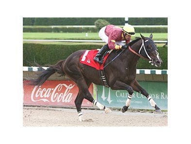 Big Drama worked six furlongs at Calder Oct. 15.