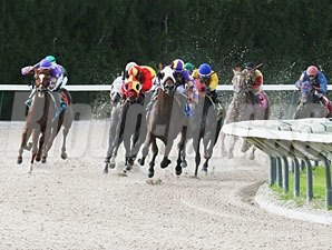 Best Plan Yet wins the Florida Stallion Series, In Reality Division.