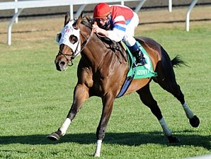 Remarkable Brass Hat Wins Sycamore