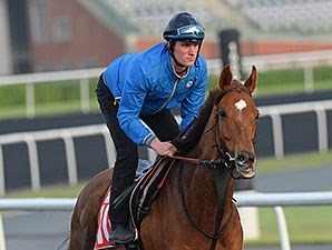Seismos, Dubai World Cup 2014