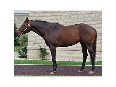 Ghostzapper