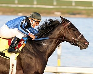 Einstein Heads Gulfstream Park Turf
