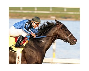 Einstein won the 2006 edition of the Gulfstream Park Turf and finished 3rd last year.
