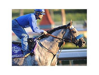 Monzante at the 2009 Breeders' Cup.