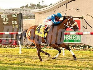 Tasty Treat wins the 2013 Daisycutter Handicap.