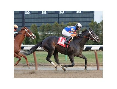 "Gravesend winner Calibrachoa is back on the inner track for the Toboggan Stakes. <br><a target=""blank"" href=""http://www.bloodhorse.com/horse-racing/photo-store?ref=http%3A%2F%2Fpictopia.com%2Fperl%2Fgal%3Fprovider_id%3D368%26ptp_photo_id%3D9334696%26ref%3Dstory"">Order This Photo</a>"
