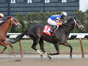 Calibrachoa wins the 2010 Gravesend.