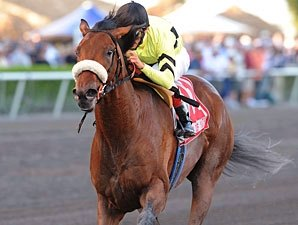 Quality Road Makes Return in Hal's Hope