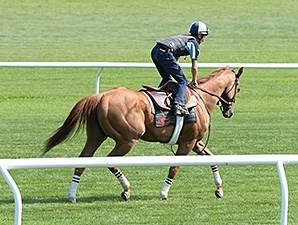 Wise Dan - Saratoga, July 18, 2014.