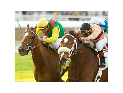 "Tizfiz outlasts a wide-eyed Marzelline to win the San Gorgonio. <br><a target=""blank"" href=""http://www.bloodhorse.com/horse-racing/photo-store?ref=http%3A%2F%2Fpictopia.com%2Fperl%2Fgal%3Fprovider_id%3D368%26ptp_photo_id%3D7311175%0D%0A%26ref%3Dstory"">Order This Photo</a>"