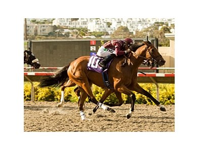 "Dakota Phone outfinishes Battle of Hastings to win the San Diego.<br><a target=""blank"" href=""http://www.bloodhorse.com/horse-racing/photo-store?ref=http%3A%2F%2Fpictopia.com%2Fperl%2Fgal%3Fprovider_id%3D368%26ptp_photo_id%3D9124521%26ref%3Dstory"">Order This Photo</a>"
