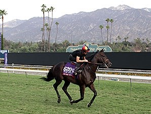 No Nay Never - Breeders' Cup 2014