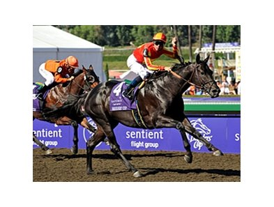 "Midnight Lute takes the Breeders' Cup Sprint for the 2nd consecutive year.<br><a target=""blank"" href=""http://www.bloodhorse.com/horse-racing/photo-store?ref=http%3A%2F%2Fpictopia.com%2Fperl%2Fgal%3Fprovider_id%3D368%26ptp_photo_id%3D6457794%26ref%3Dstory"">Order This Photo</a>"