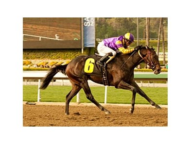 "Premier Pegasus<br><a target=""blank"" href=""http://www.bloodhorse.com/horse-racing/photo-store?ref=http%3A%2F%2Fpictopia.com%2Fperl%2Fgal%3Fprovider_id%3D368%26ptp_photo_id%3D9445962%26ref%3Dstory"">Order This Photo</a>"