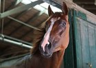 Just-Retired Dullahan Euthanized Due to Colic
