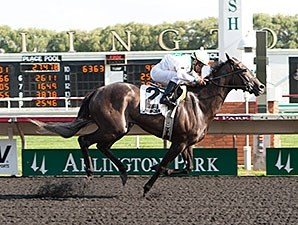 My Option wins the 2014 Chicago Handicap.
