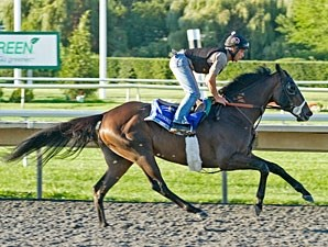 Handsome Mike - Arlington Park, August 17, 2012