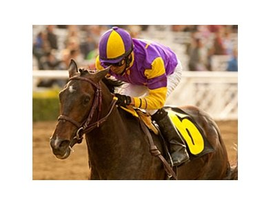 "Premier Pegasus<br><a target=""blank"" href=""http://www.bloodhorse.com/horse-racing/photo-store?ref=http%3A%2F%2Fpictopia.com%2Fperl%2Fgal%3Fprovider_id%3D368%26ptp_photo_id%3D9445966%26ref%3Dstory"">Order This Photo</a>"