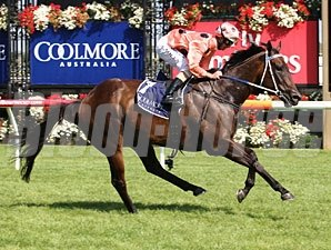 Black Caviar wins the Lightning Stakes and makes 19 wins in a row.