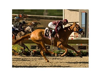 "Sorrento winner Evita Argentina heads the Del Mar Debutante.<br><a target=""blank"" href=""http://www.bloodhorse.com/horse-racing/photo-store?ref=http%3A%2F%2Fpictopia.com%2Fperl%2Fgal%3Fprovider_id%3D368%26ptp_photo_id%3D5428834%26ref%3Dstory"">Order This Photo</a>"
