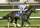 Big Drama Retired; Breeding Plans Undecided