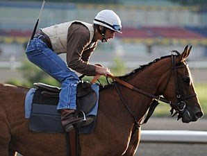 Moment of Majesty at Woodbine on June 11, 2010.