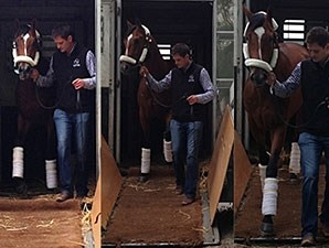 Goldencents arrives at Churchill Downs 4/27/2013.