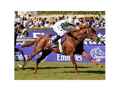 "Conduit was victorious in the 2008 Breeders' Cup Turf.<br><a target=""blank"" href=""http://www.bloodhorse.com/horse-racing/photo-store?ref=http%3A%2F%2Fpictopia.com%2Fperl%2Fgal%3Fprovider_id%3D368%26ptp_photo_id%3D6458147%26ref%3Dstory"">Order This Photo</a>"